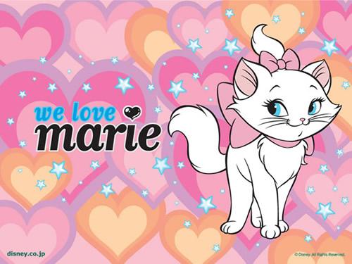Kätzchen Marie