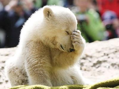Knut Eisbär